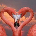 Красивые птицы фламинго!
