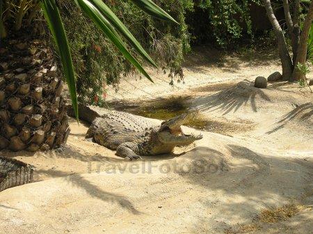 Крокодилы пустыни