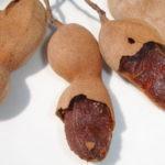 Тамаринд – тропический плод, лакомство.