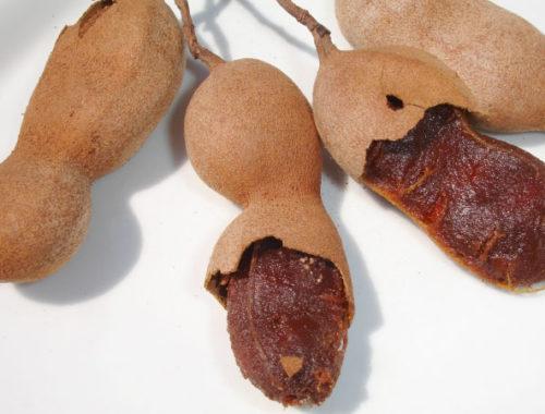 Тамаринд – тропический плод