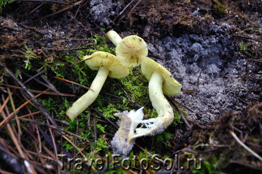 грибы к Новому году