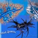 Голубой дракон — удивительное создание